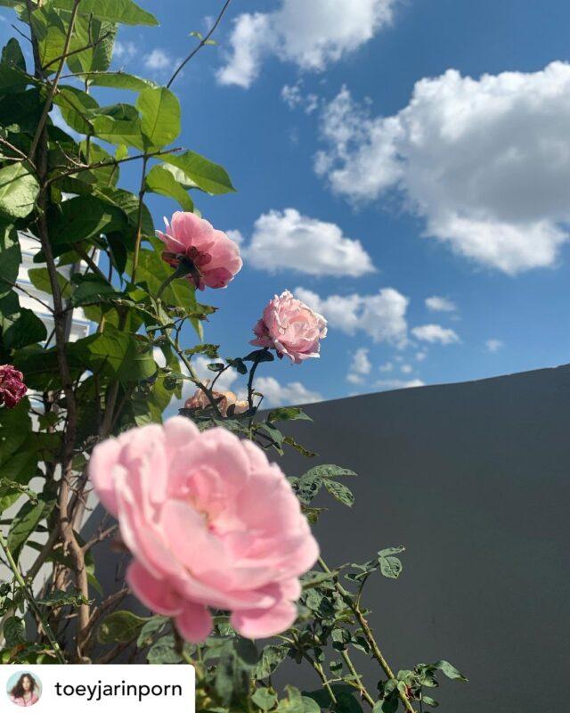 ดอกไม้น่าปลูก